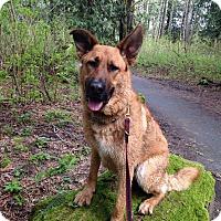 Adopt A Pet :: Charlie - BC Wide, BC