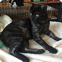 Adopt A Pet :: Ash - Edmonton, AB
