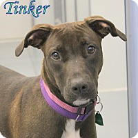 Adopt A Pet :: Tinker - Winter Haven, FL