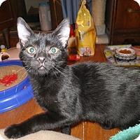 Adopt A Pet :: Sam Winchester - Norwich, NY
