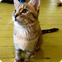 Adopt A Pet :: Leeta - St. Louis, MO