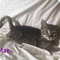 Adopt A Pet :: Mae - Jackson, NJ
