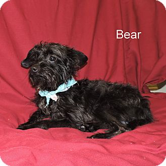Terrier (Unknown Type, Small) Mix Dog for adoption in Slidell, Louisiana - Bear