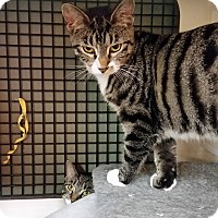 Adopt A Pet :: Nicole (CV) - Little Falls, NJ