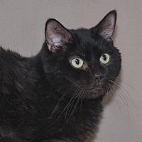 Adopt A Pet :: Korey - Elmwood Park, NJ