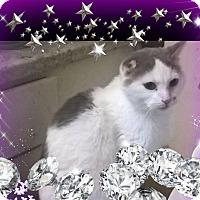 Adopt A Pet :: Rascal - london, ON