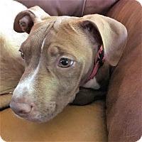 Adopt A Pet :: Jesse - Oakley, CA
