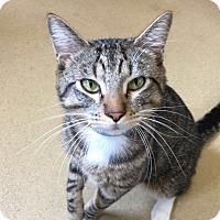 Adopt A Pet :: Smokey - Chula Vista, CA