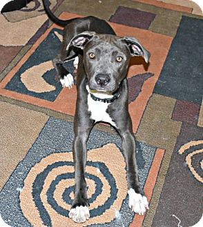 Terrier (Unknown Type, Small) Mix Dog for adoption in Inverness, Florida - Zsa Zsa