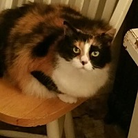 Adopt A Pet :: Angelina - Ortonville, MI