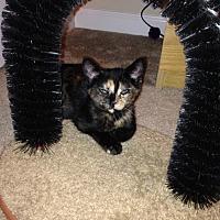 Adopt A Pet :: Karen     171250 - Atlanta, GA