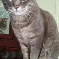 Adopt A Pet :: Isaac - Fairmont, WV