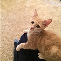 Adopt A Pet :: Queso - Richmond, VA