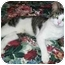 Photo 3 - Domestic Shorthair Cat for adoption in Amelia, Ohio - Romeo