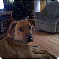 Adopt A Pet :: Roxy - Alliance, NE