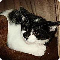 Adopt A Pet :: Clutch - Cheyenne, WY