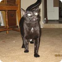 Adopt A Pet :: Sabrina - Glendale, AZ