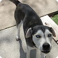 Adopt A Pet :: Stryker - Inverness, FL