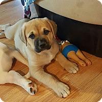 Adopt A Pet :: Nukka - Knoxville, TN
