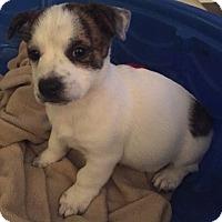 Adopt A Pet :: Caterpillar - Gainesville, FL