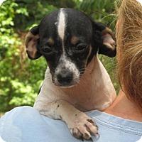 Adopt A Pet :: Mango - Ball Ground, GA
