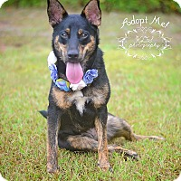 Adopt A Pet :: Rosey - Fort Valley, GA