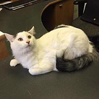 Adopt A Pet :: ARKANSAS - Gilberts, IL