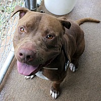 Adopt A Pet :: Hooch - Fort Madison, IA