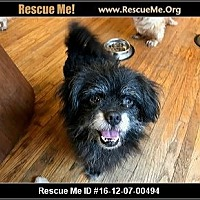 Adopt A Pet :: CHEWY - SO CALIF, CA