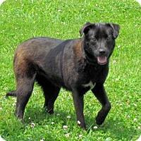Adopt A Pet :: Velvet - Batavia, OH