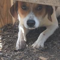 Adopt A Pet :: SPARKY - Anniston, AL