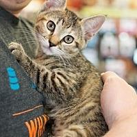 Adopt A Pet :: Bonnie - Fremont, CA