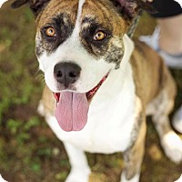 Adopt A Pet :: Hercules - Plainfield, CT