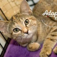 Adopt A Pet :: Foxy - Lindenwold, NJ