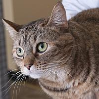 Adopt A Pet :: Frida - Chicago, IL