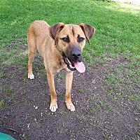 Adopt A Pet :: NORMA - Oakbank, MB