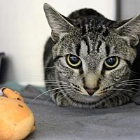 Adopt A Pet :: june - Muskegon, MI