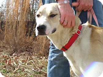 Husky/Great Dane Mix Dog for adoption in Fort Valley, Georgia - Magu