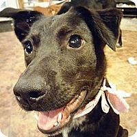 Adopt A Pet :: Marlo - PENDING, in Maine - kennebunkport, ME