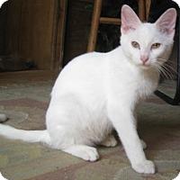 Adopt A Pet :: Cumulus - Dallas, TX