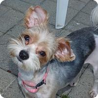 Adopt A Pet :: Emmie - Conroe, TX