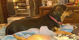 Dachshund/Chihuahua Mix Dog for adoption in Tonopah, Arizona - Rufus