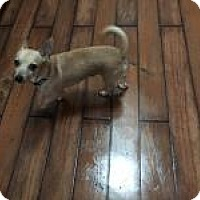 Adopt A Pet :: Soupy Tails - Mount Gretna, PA
