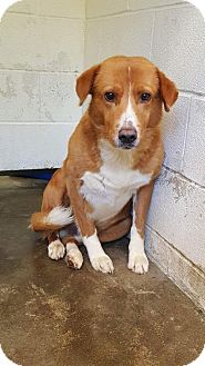 Collie Mix Dog for adoption in Northville, Michigan - U16 Cashel