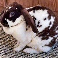 Adopt A Pet :: Bonnie - Hahira, GA