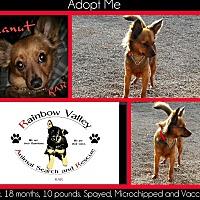 Adopt A Pet :: Peanut - Buckeye, AZ