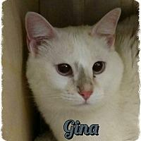 Adopt A Pet :: Gina - Pueblo West, CO