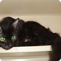 Adopt A Pet :: Gypsy - Ridgeland, SC