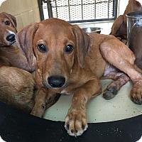 Adopt A Pet :: Huey - Kirby, TX