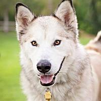Adopt A Pet :: Bodie - Salt Lake City, UT